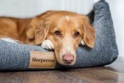 dog in a sleepeezee blue basket bed